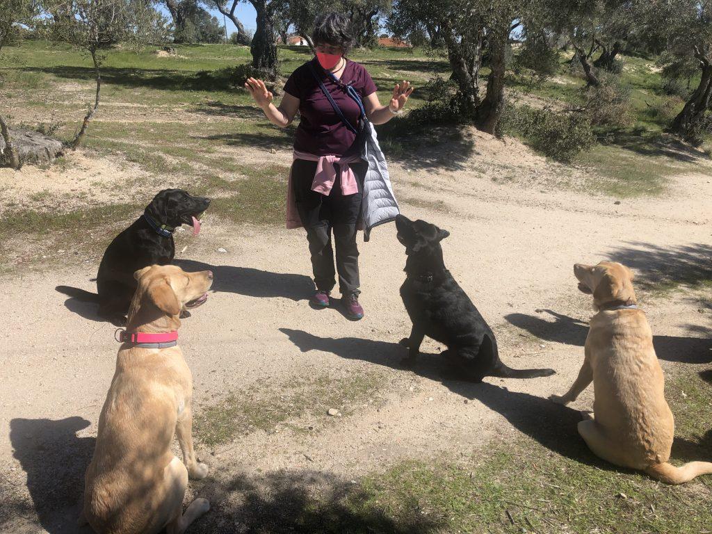 Goleta en El Pardo jugando con varios perros amigos